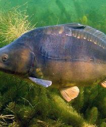 Békés Halas Horgászat